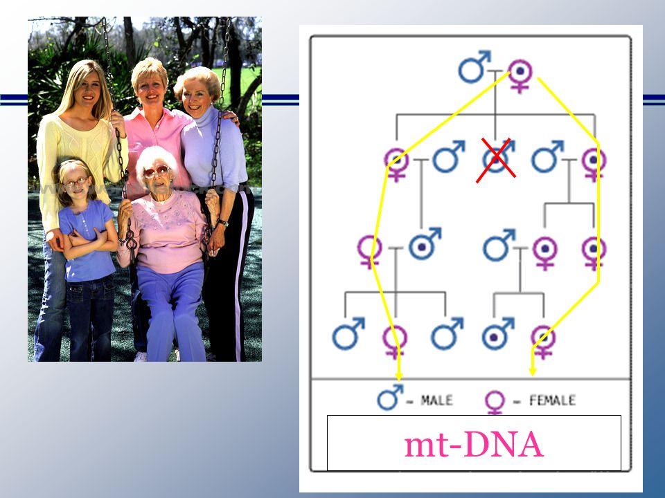 mt-DNA
