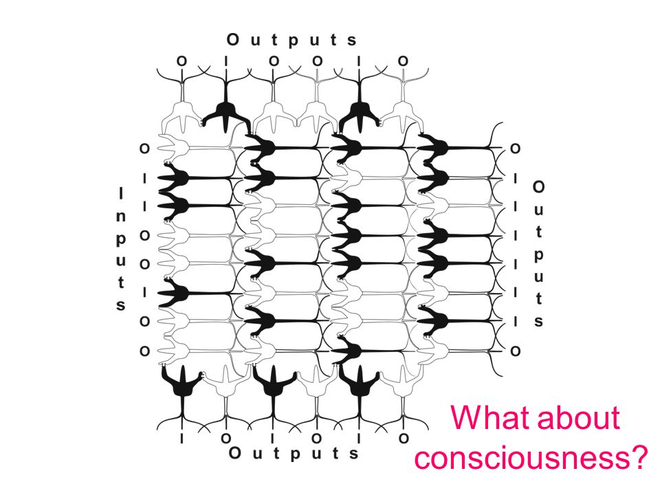 What about consciousness?