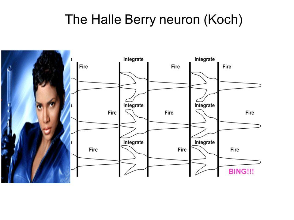 BING!!! The Halle Berry neuron (Koch)