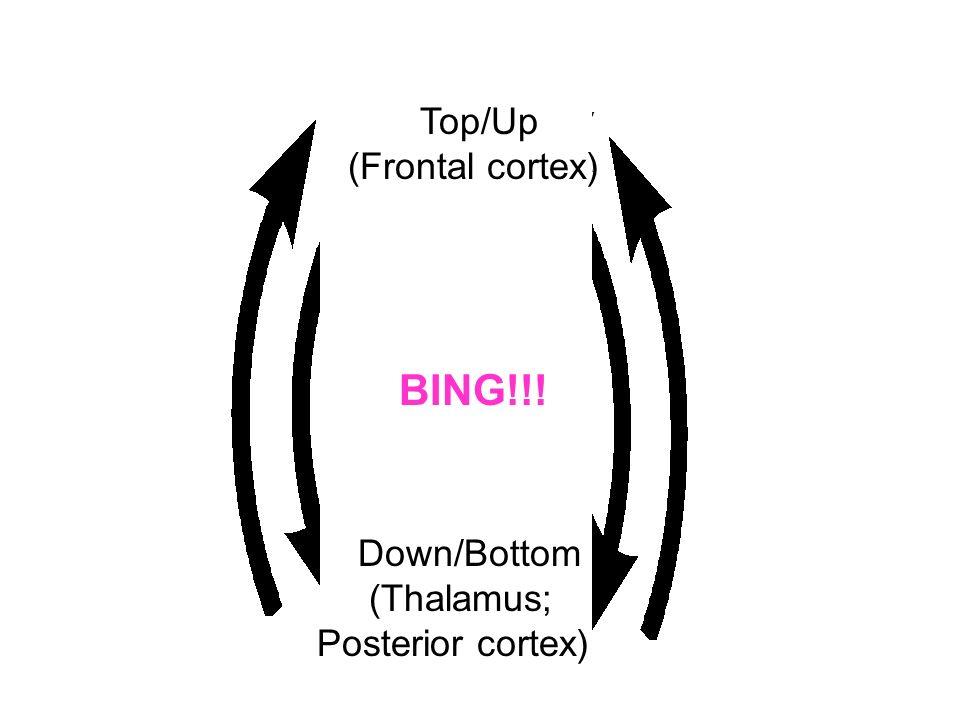 Top/Up (Frontal cortex) BING!!! Down/Bottom (Thalamus; Posterior cortex)
