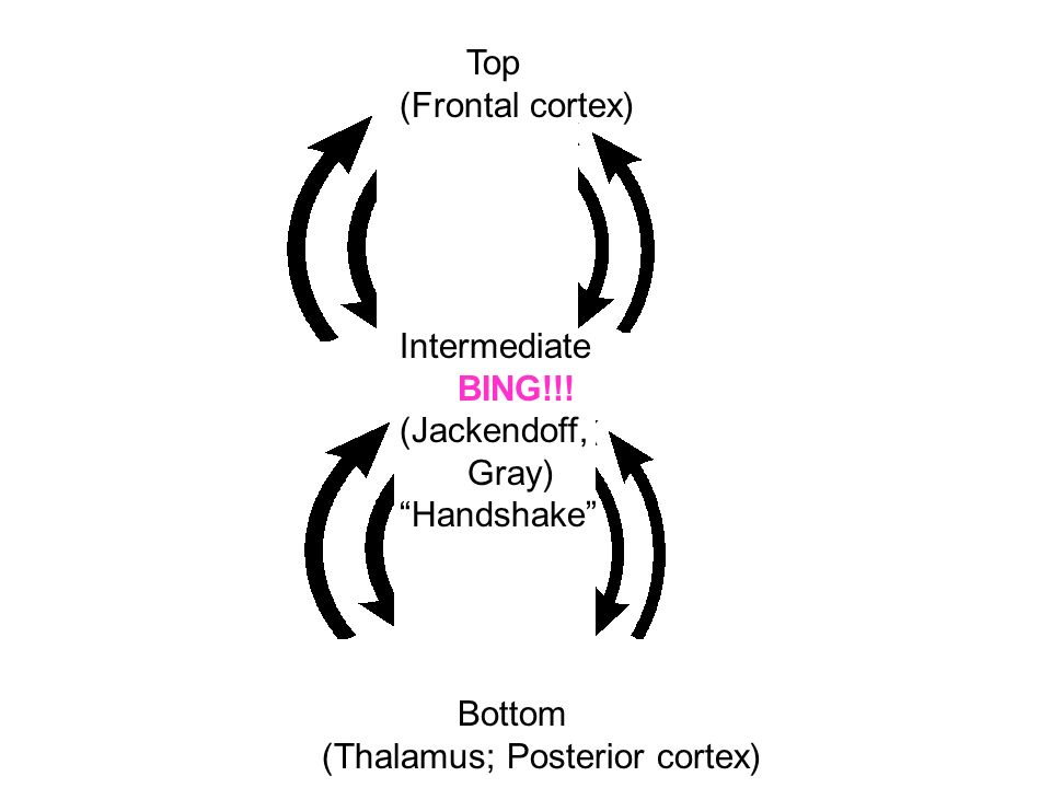 Top (Frontal cortex) Intermediate BING!!! (Jackendoff, Gray) Handshake Bottom (Thalamus; Posterior cortex)