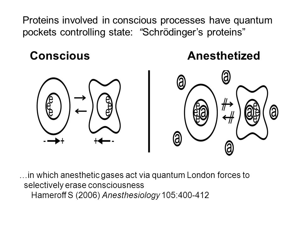 Conscious Anesthetized …in which anesthetic gases act via quantum London forces to selectively erase consciousness Hameroff S (2006) Anesthesiology 10