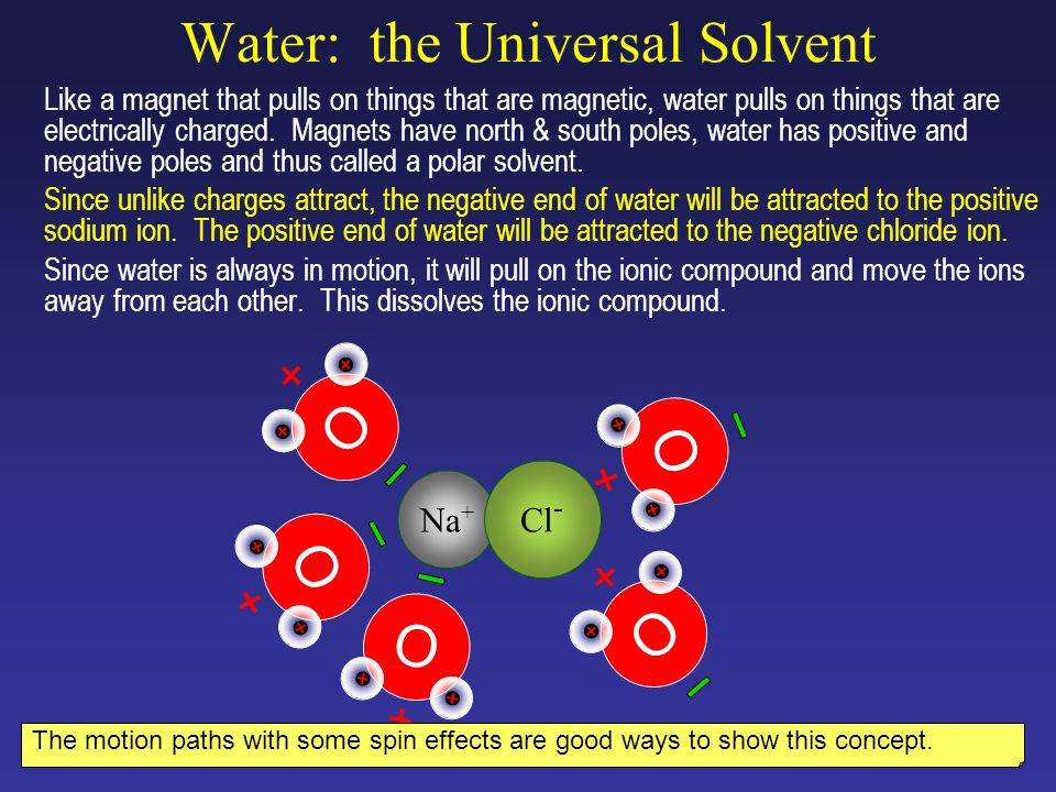 Water: the Universal Solvent One side of water is negatively charged because the oxygen atom keeps the shared electrons longer than the hydrogen atoms