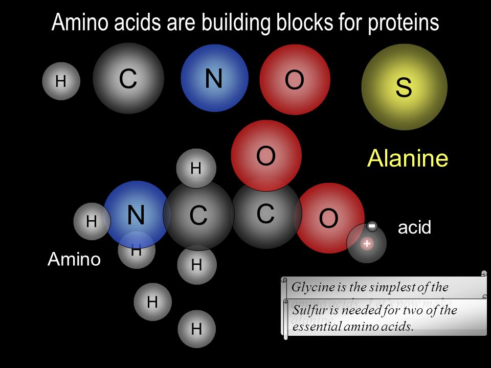 H H H N C O O C C N O H HH Ammonia Acetic acid Vinegar C H H H Lets look at ammonia and acetic acid and how the proton from acetic acid may go to ammo