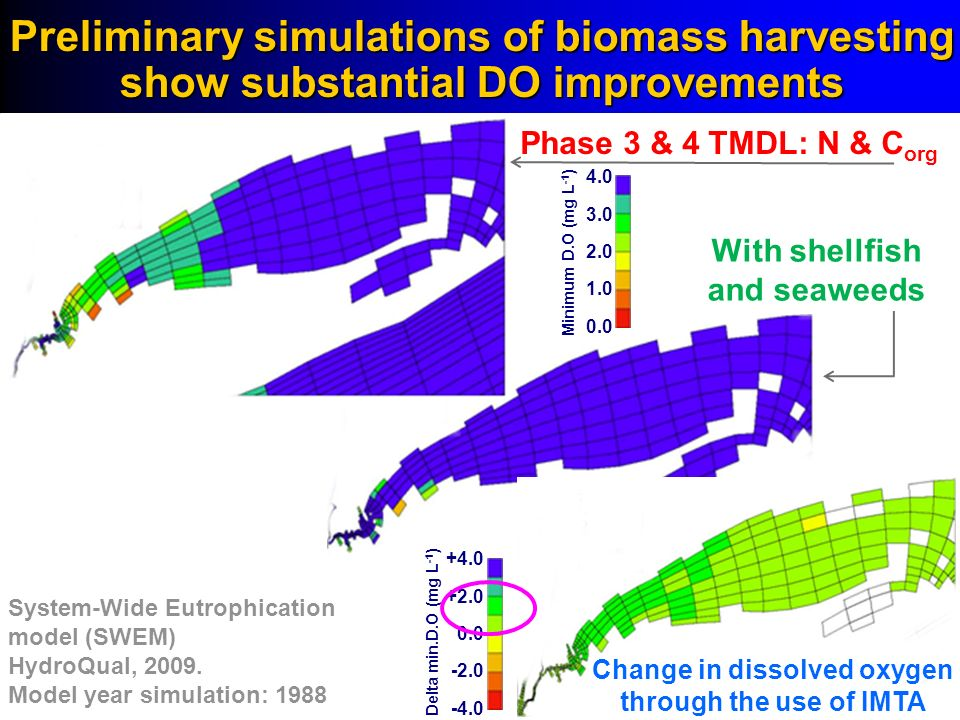 Preliminary simulations of biomass harvesting show substantial DO improvements Phase 3 & 4 TMDL: N & C org With shellfish and seaweeds Change in disso