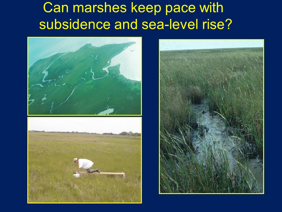 Can marshes keep pace with subsidence and sea-level rise?