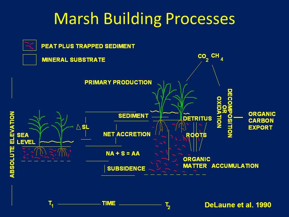 Marsh Building Processes DeLaune et al. 1990