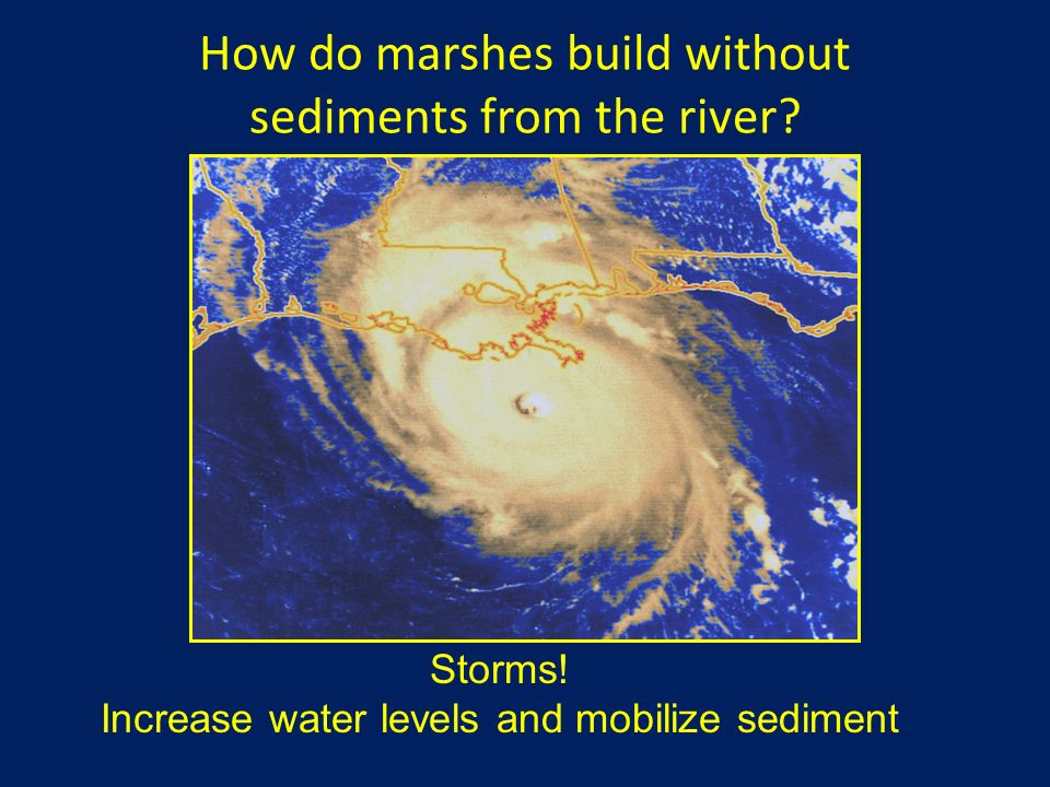 How do marshes build without sediments from the river? Storms! Increase water levels and mobilize sediment