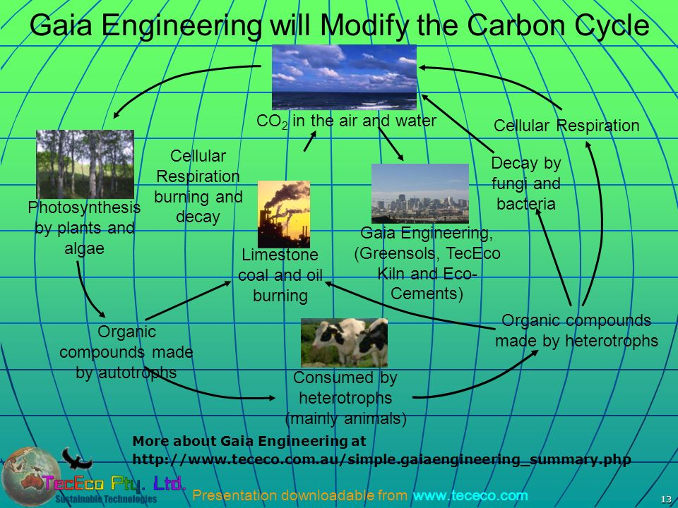 Presentation downloadable from www.tececo.com 13 Gaia Engineering will Modify the Carbon Cycle Photosynthesis by plants and algae Consumed by heterotr