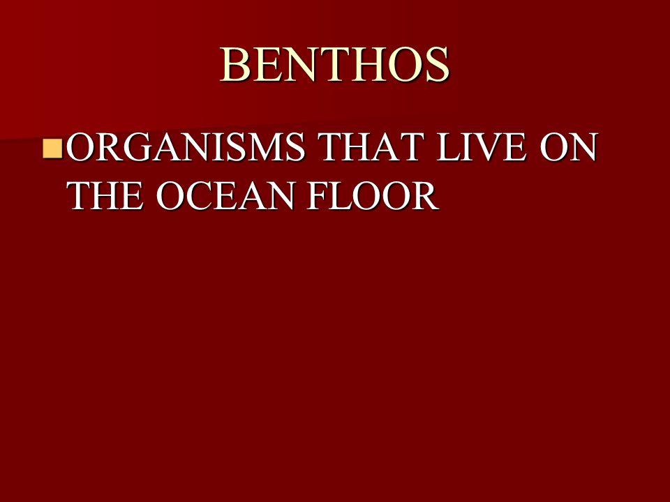 BENTHOS ORGANISMS THAT LIVE ON THE OCEAN FLOOR ORGANISMS THAT LIVE ON THE OCEAN FLOOR