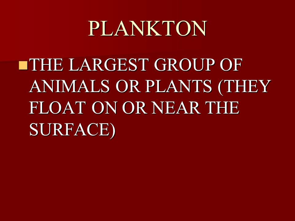 PLANKTON THE LARGEST GROUP OF ANIMALS OR PLANTS (THEY FLOAT ON OR NEAR THE SURFACE) THE LARGEST GROUP OF ANIMALS OR PLANTS (THEY FLOAT ON OR NEAR THE