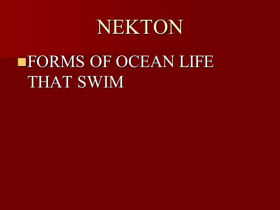 NEKTON FORMS OF OCEAN LIFE THAT SWIM FORMS OF OCEAN LIFE THAT SWIM