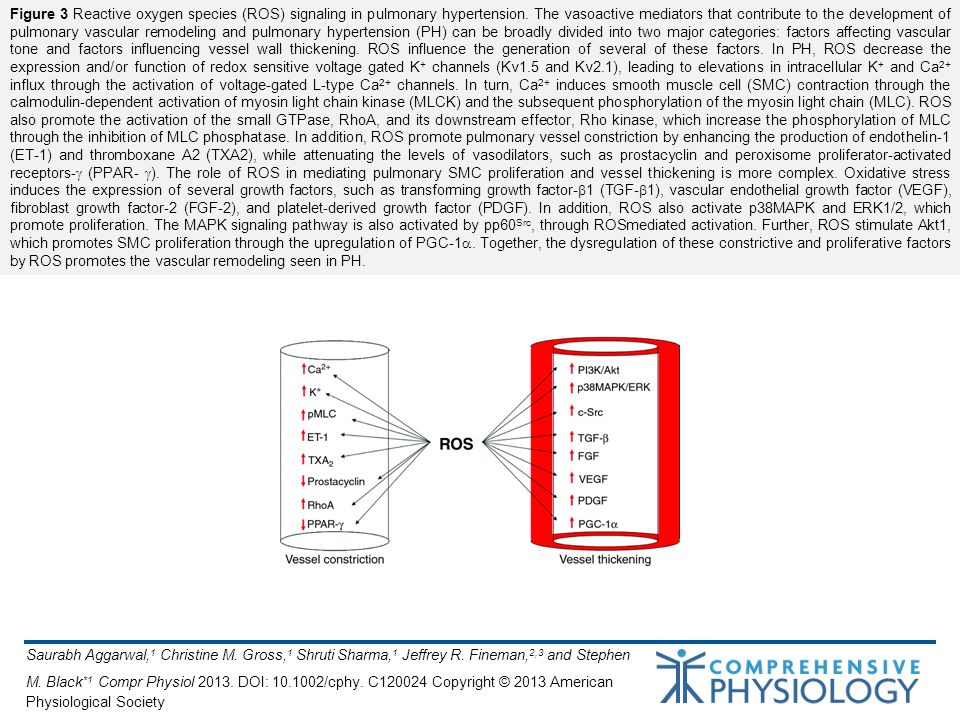 Saurabh Aggarwal, 1 Christine M. Gross, 1 Shruti Sharma, 1 Jeffrey R. Fineman, 2,3 and Stephen M. Black *1 Compr Physiol 2013. DOI: 10.1002/cphy. C120