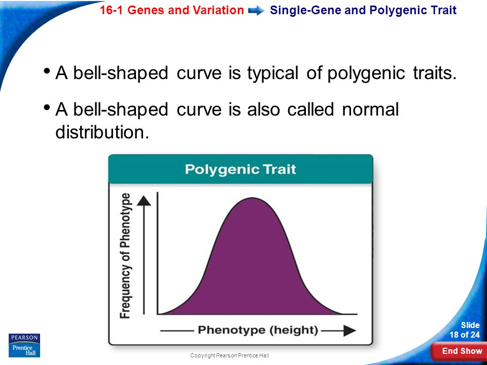 End Show 16-1 Genes and Variation Slide 18 of 24 Copyright Pearson Prentice Hall Single-Gene and Polygenic Trait A bell-shaped curve is typical of pol