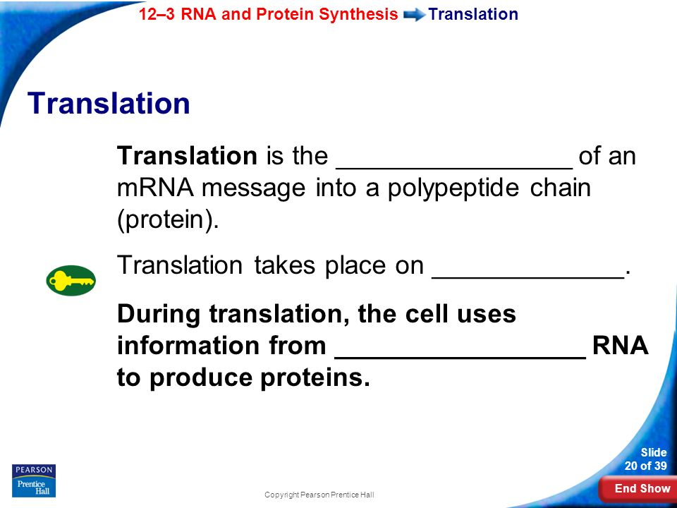 End Show 12–3 RNA and Protein Synthesis Slide 20 of 39 Copyright Pearson Prentice Hall Translation Translation is the ________________ of an mRNA mess