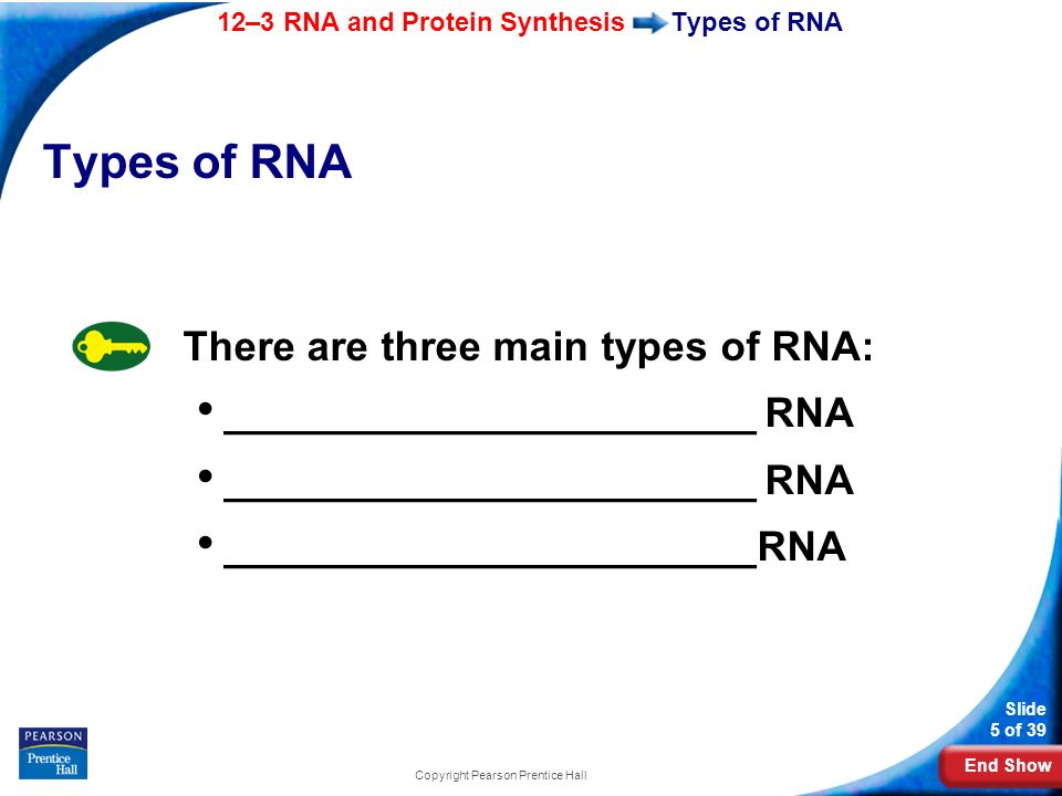 End Show 12–3 RNA and Protein Synthesis Slide 5 of 39 Copyright Pearson Prentice Hall Types of RNA There are three main types of RNA: ________________