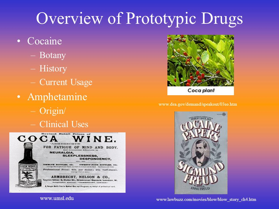 Overview of Prototypic Drugs Cocaine –Botany –History –Current Usage Amphetamine –Origin/ –Clinical Uses www.dea.gov/demand/speakout/03so.htm www.lawb