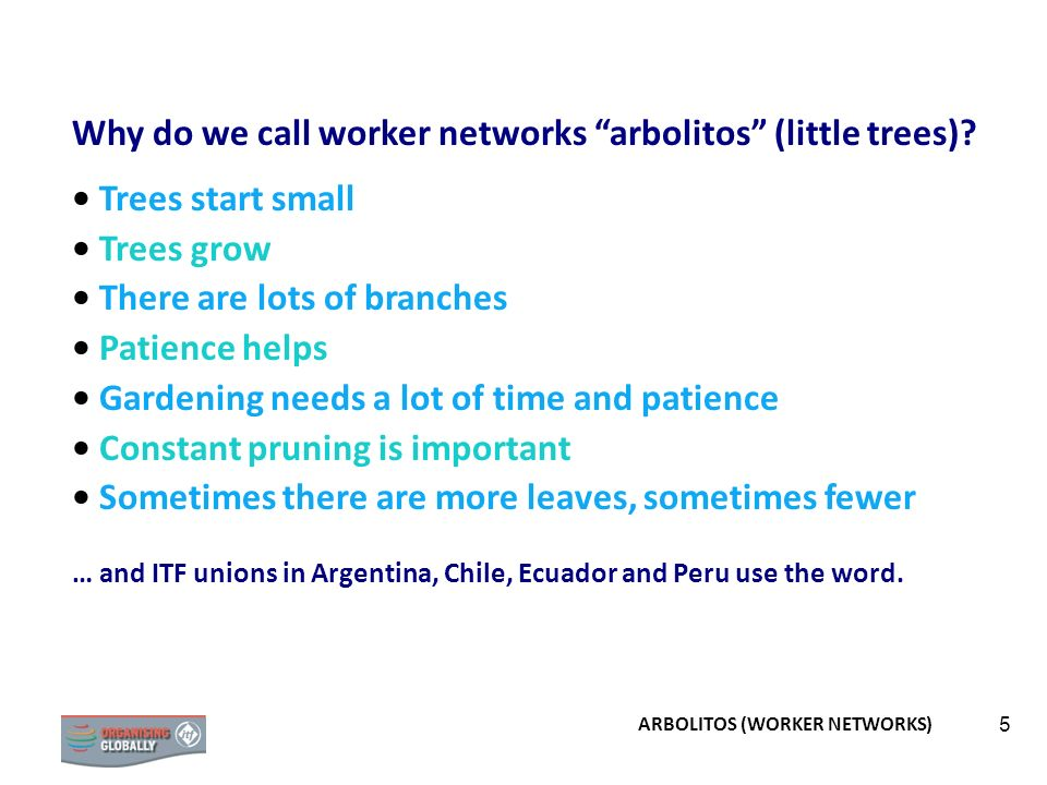 5 Why do we call worker networks arbolitos (little trees)? Trees start small Trees grow There are lots of branches Patience helps Gardening needs a lo