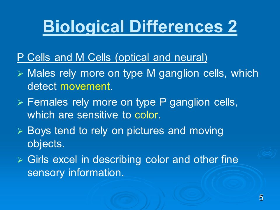 4 Biological Differences 1 Frontal Lobe Less developed in boys. (In elementary schools, the difference may be one to two years.) Makes boys more impul