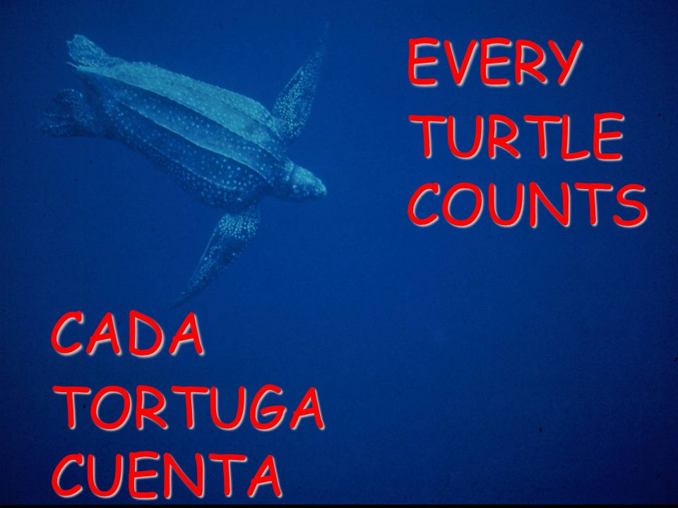 CADA TORTUGA CUENTA EVERY TURTLE COUNTS