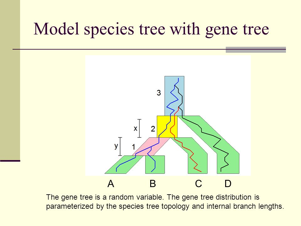 Model species tree with gene tree A B C D The gene tree is a random variable. The gene tree distribution is parameterized by the species tree topology