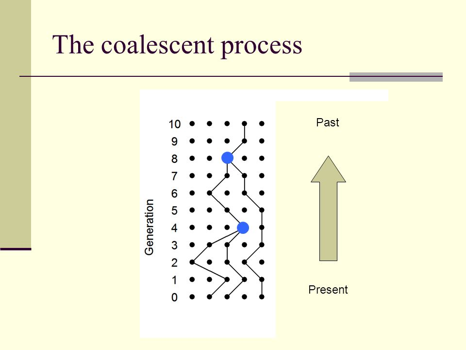 The coalescent process Past Present