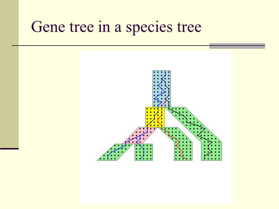 Gene tree in a species tree