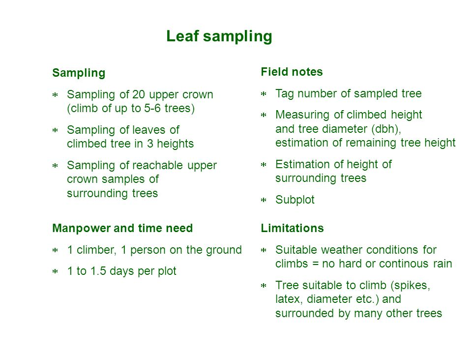 Sampling Sampling of 20 upper crown (climb of up to 5-6 trees) Sampling of leaves of climbed tree in 3 heights Sampling of reachable upper crown sampl
