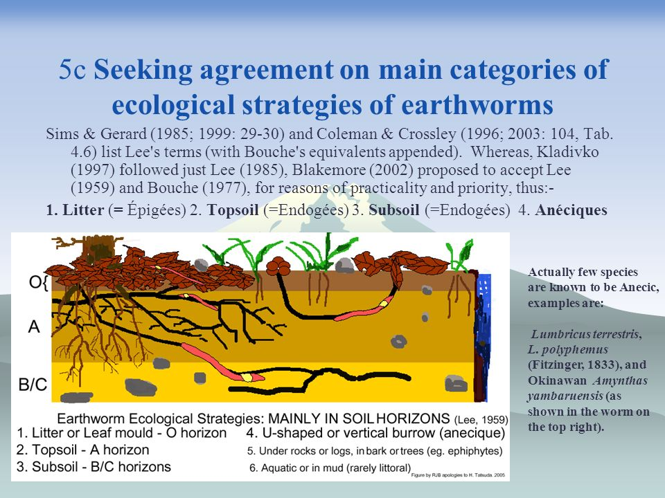 5c Seeking agreement on main categories of ecological strategies of earthworms Sims & Gerard (1985; 1999: 29-30) and Coleman & Crossley (1996; 2003: 1