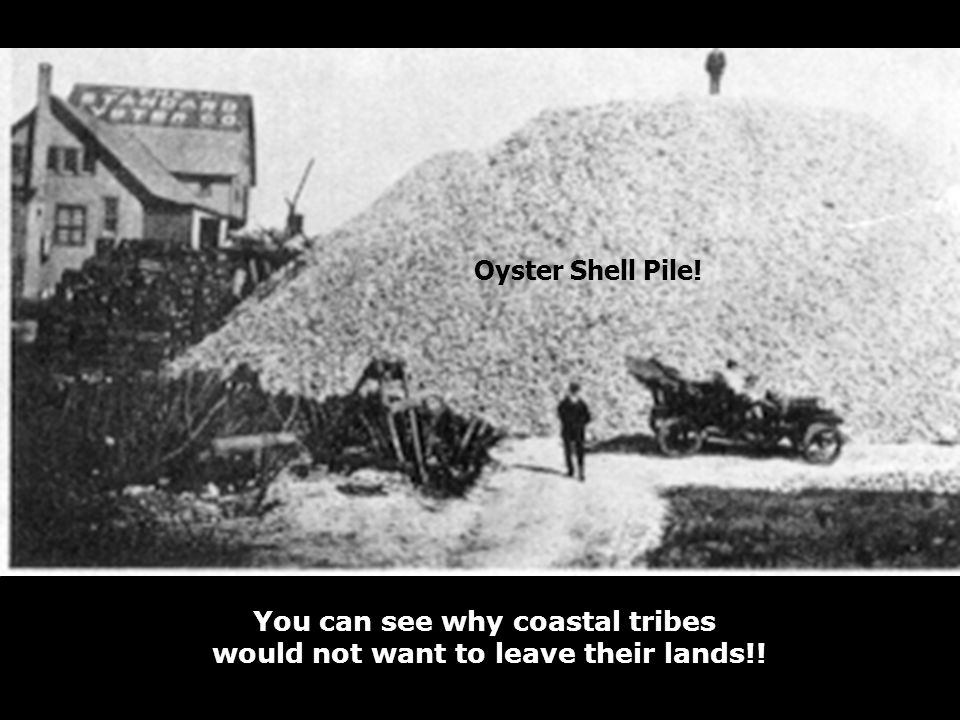 Oyster Shell Pile! You can see why coastal tribes would not want to leave their lands!!