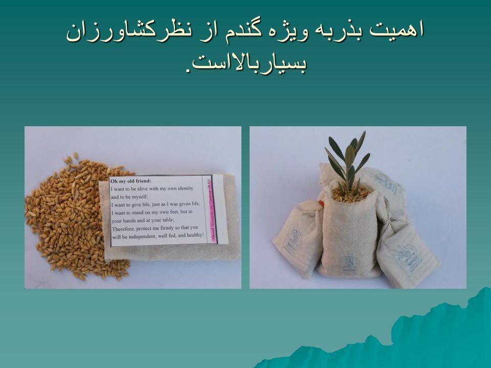 اهمیت بذربه ویژه گندم از نظرکشاورزان بسیاربالااست.