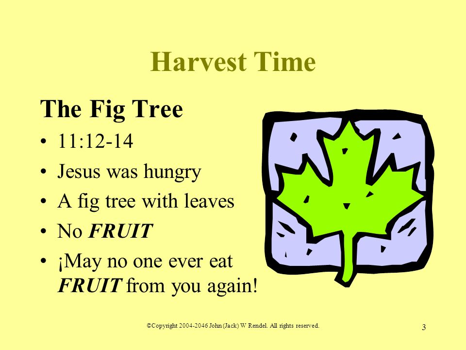©Copyright 2004-2046 John (Jack) W Rendel. All rights reserved. 3 Harvest Time The Fig Tree 11:12-14 Jesus was hungry A fig tree with leaves No FRUIT