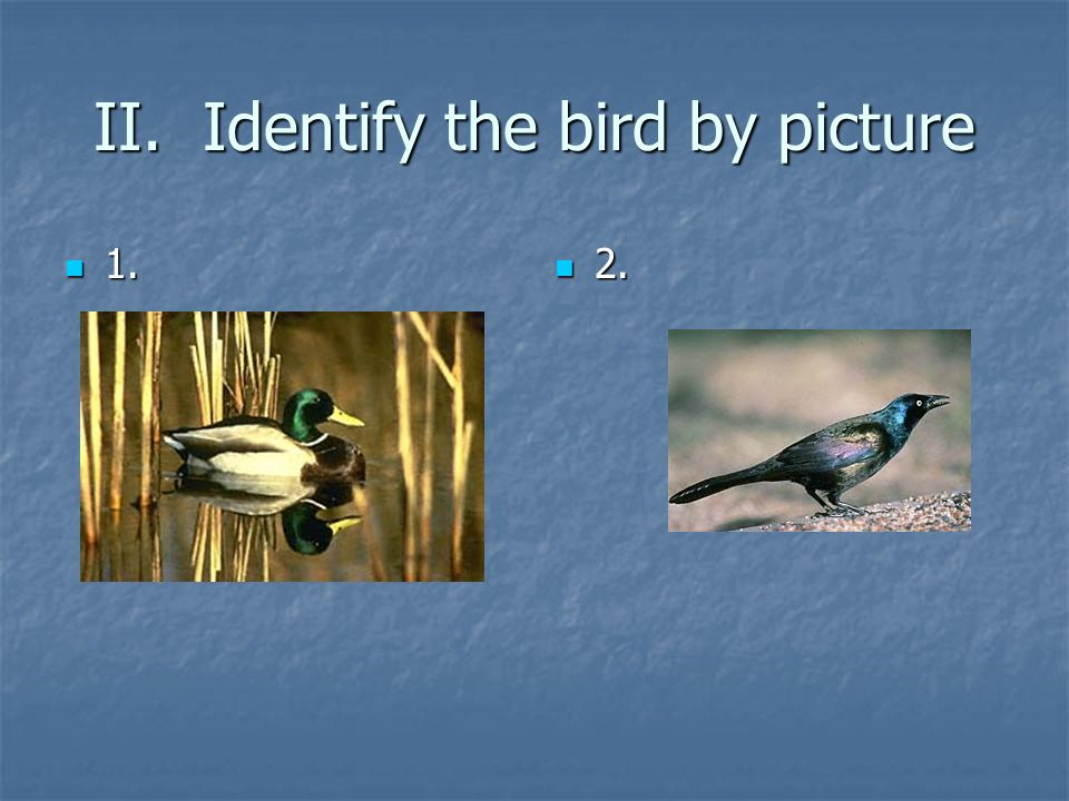 II. Identify the bird by picture
