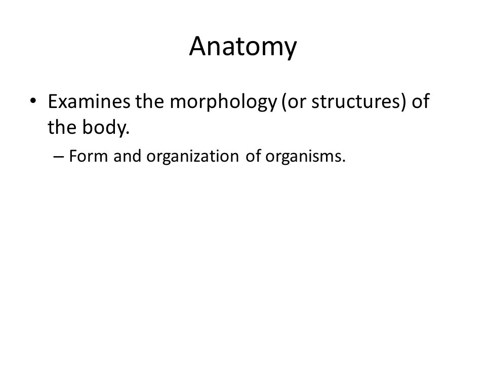 Anatomy Examines the morphology (or structures) of the body. – Form and organization of organisms.