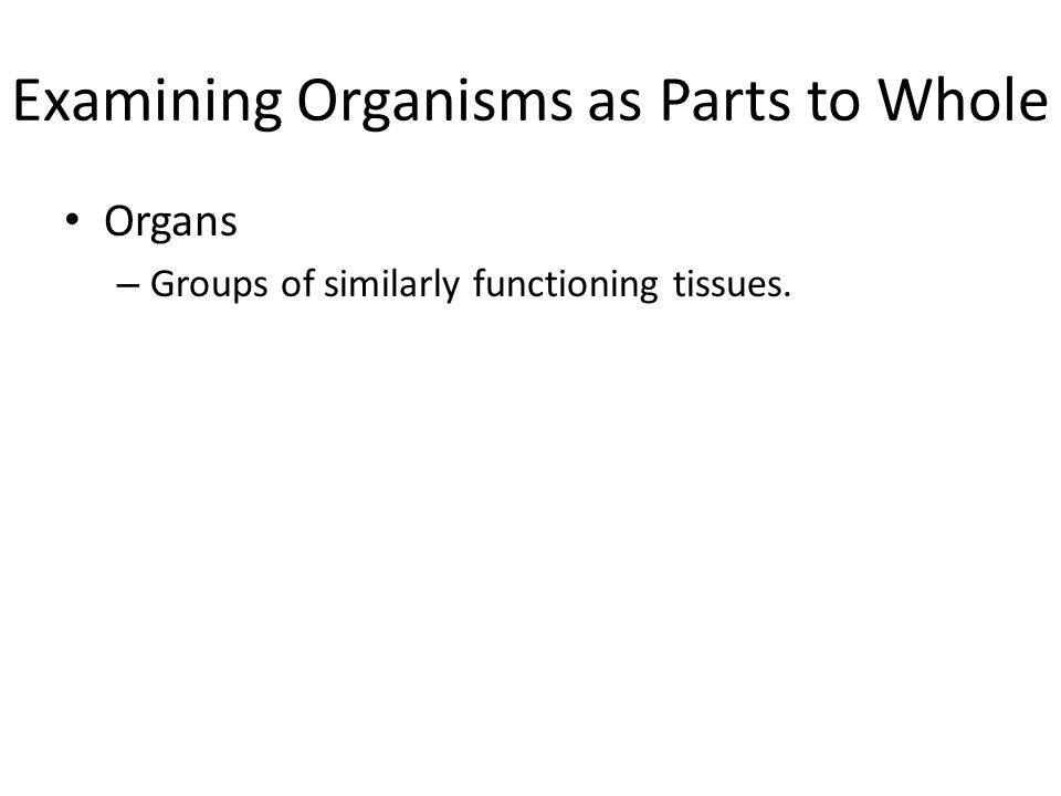 Examining Organisms as Parts to Whole Organs – Groups of similarly functioning tissues.