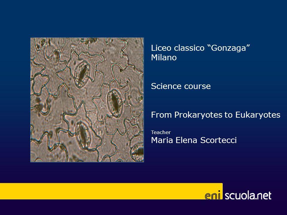 12 Eukaryotes plantae 12 stomata cells in Setcrasea