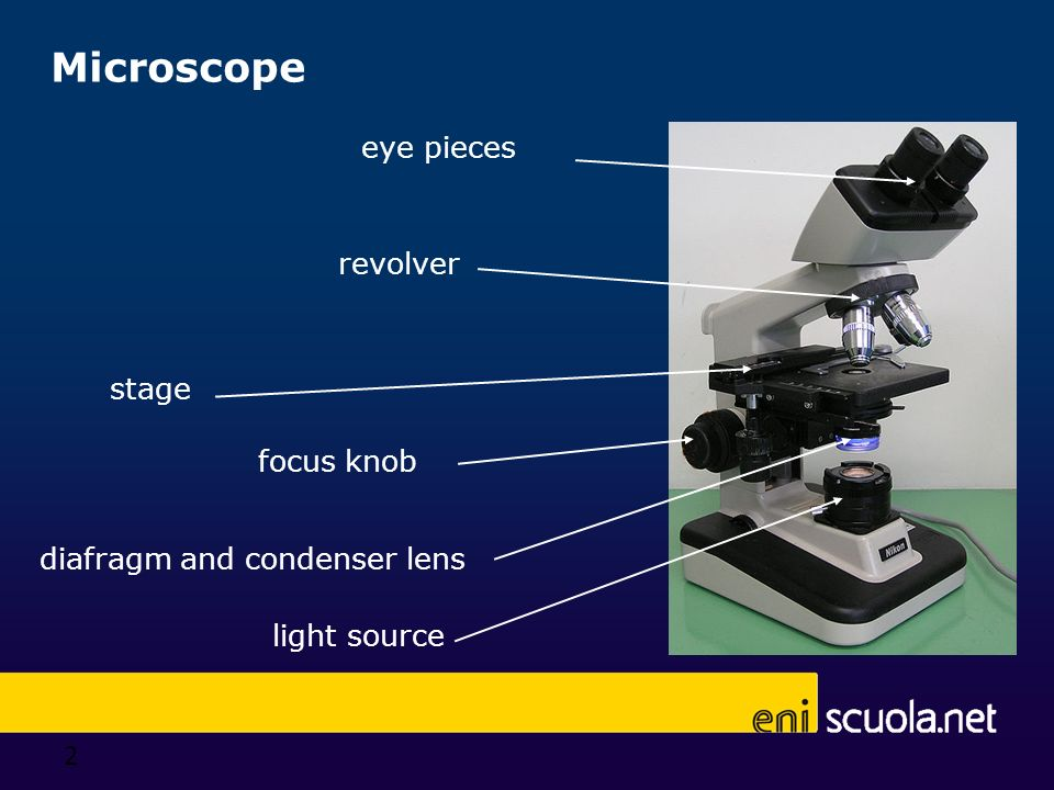 2 Microscope diafragm and condenser lens stage revolver eye pieces focus knob light source