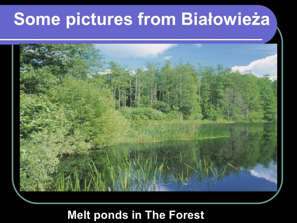 Some pictures from Białowieża Melt ponds in The Forest