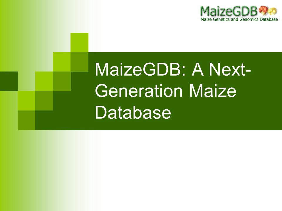 MaizeGDB: A Next- Generation Maize Database