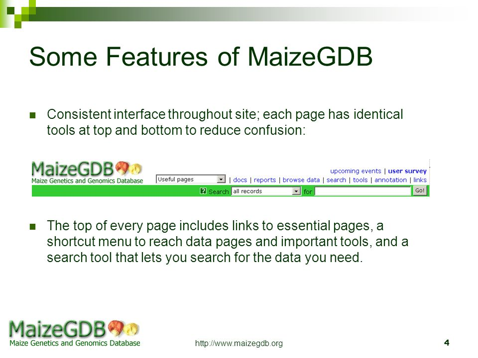 http://www.maizegdb.org4 Some Features of MaizeGDB Consistent interface throughout site; each page has identical tools at top and bottom to reduce con
