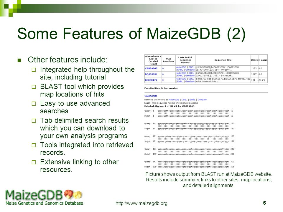 http://www.maizegdb.org5 Some Features of MaizeGDB (2) Other features include: Integrated help throughout the site, including tutorial BLAST tool whic