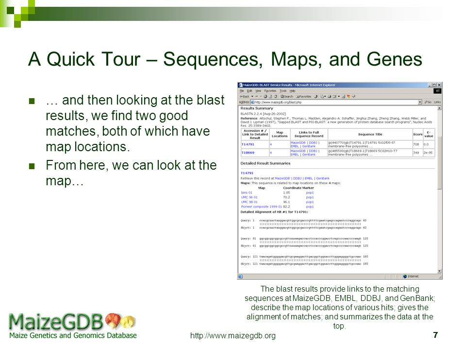 http://www.maizegdb.org7 A Quick Tour – Sequences, Maps, and Genes … and then looking at the blast results, we find two good matches, both of which ha