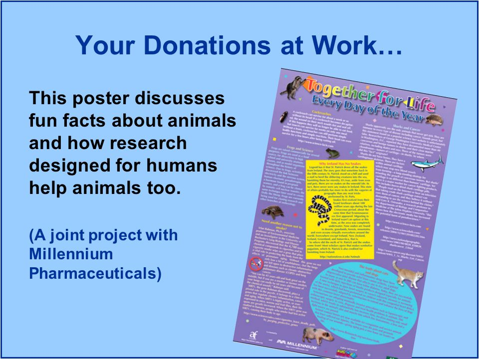 This poster discusses fun facts about animals and how research designed for humans help animals too. (A joint project with Millennium Pharmaceuticals)