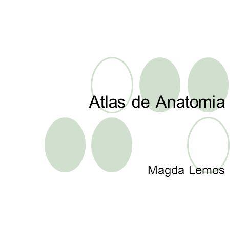 Atlas de Anatomia Magda Lemos