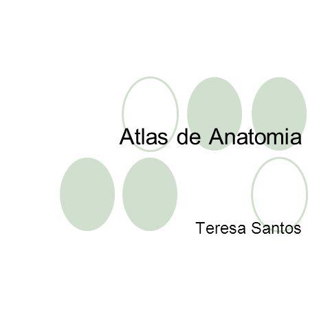 Atlas de Anatomia Teresa Santos