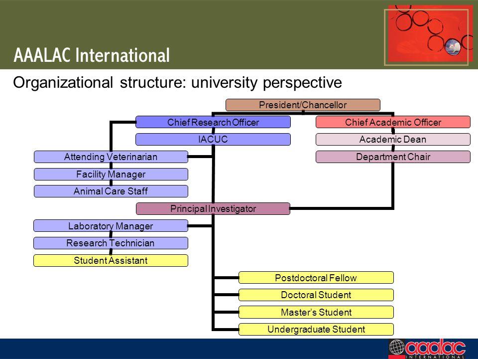 Organizational structure: university perspective
