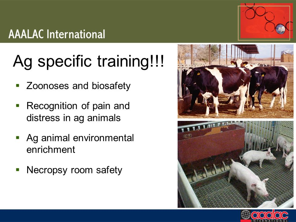 Ag specific training!!! Zoonoses and biosafety Recognition of pain and distress in ag animals Ag animal environmental enrichment Necropsy room safety