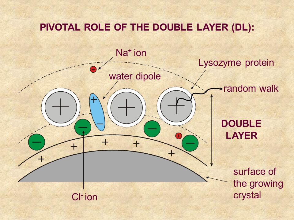 PIVOTAL ROLE OF THE DOUBLE LAYER (DL): Cl - ion DOUBLE LAYER surface of the growing crystal Na + ion water dipole Lysozyme protein random walk