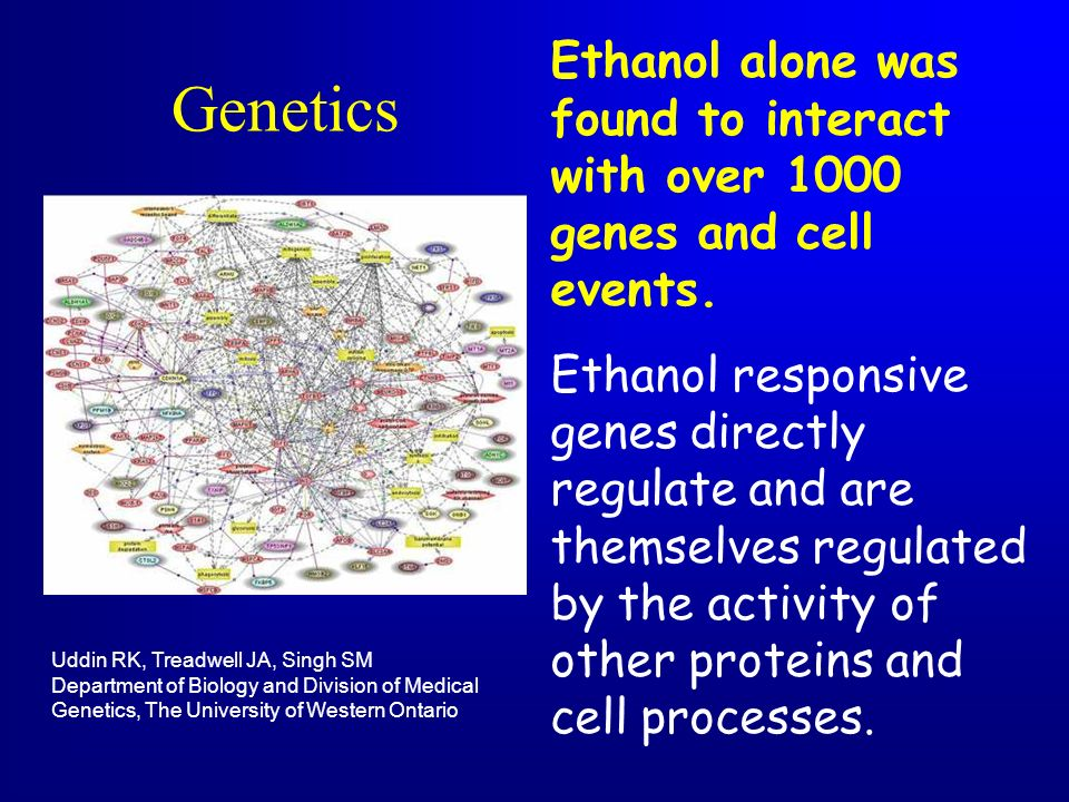Genetics Ethanol alone was found to interact with over 1000 genes and cell events. Ethanol responsive genes directly regulate and are themselves regul
