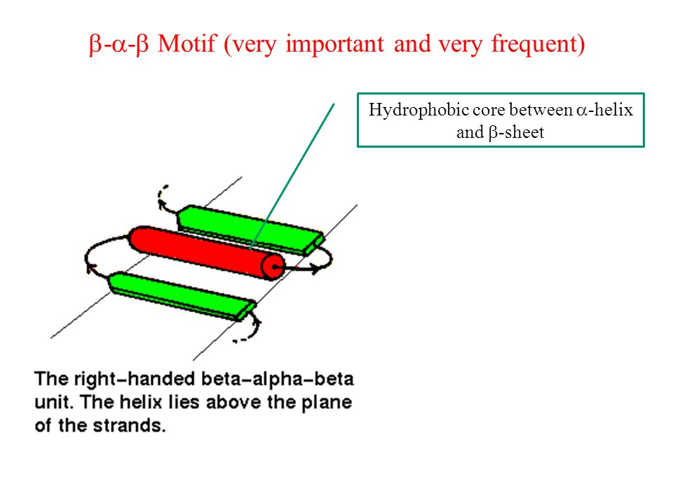 - - Motif (very important and very frequent) Hydrophobic core between -helix and -sheet